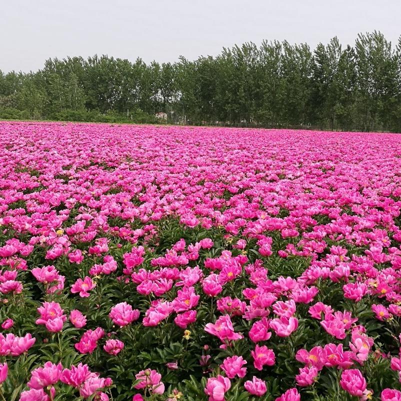 Shufeng Jiedu agriculture